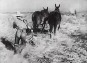 Sam (Zachary Scott) pushes a plow pulled by two mules through a field.